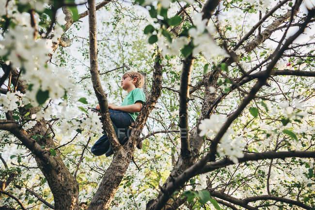 Мальчик взбирается на яблоню на природу — стоковое фото