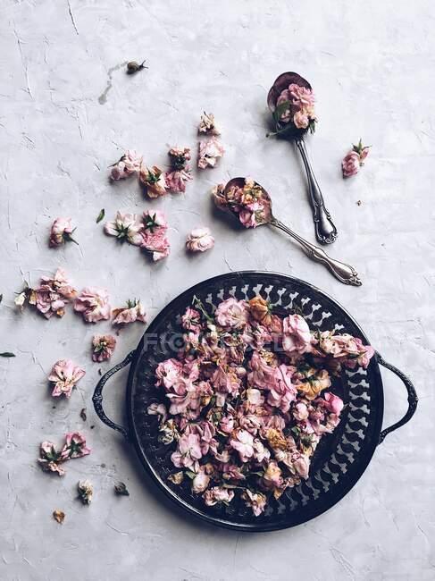 Розовый цвет на блюде из перца и маленьком соусе — стоковое фото