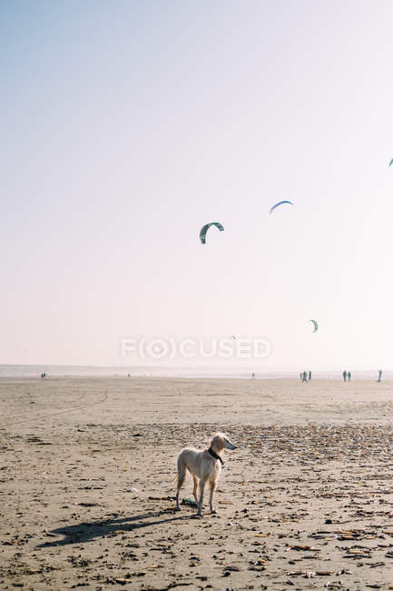 Scenic view of dog standing on a beach — стоковое фото