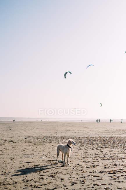 Vue scénique de chien restant sur une plage — Photo de stock