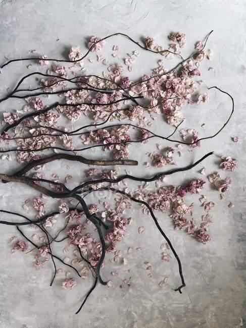 Вид на гілки дерев і рожеві квіти. — стокове фото