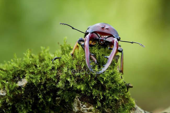 Nahaufnahme eines Käfers auf verschwommenem Hintergrund — Stockfoto