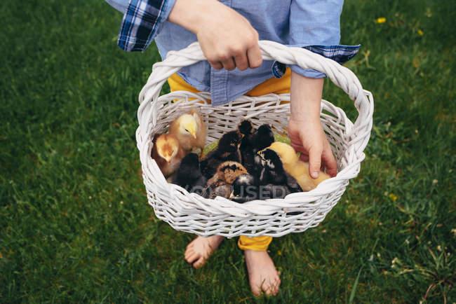 Boy holding a basket of baby chicks — Stock Photo