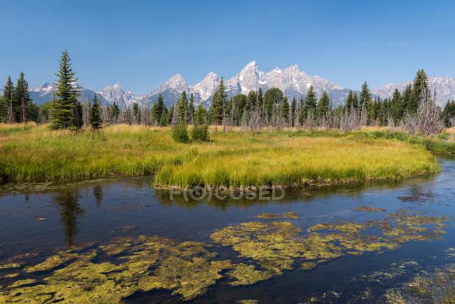 Scenic view of Schwabachers Landing, Moose, Grand Teton National Park, Wyoming, America, USA — Stock Photo