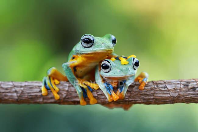 Primer plano de adorables ranas tropicales en hábitat natural - foto de stock