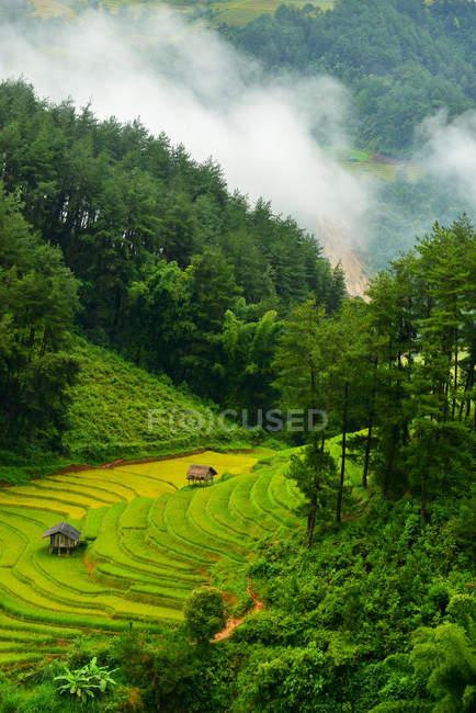 Scenic view of beautiful green rice terrace during sunset, Vietnam — Stock Photo