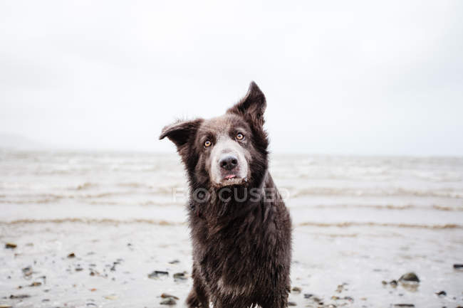 Portrait of a dog on the beach, closeup view — Stock Photo