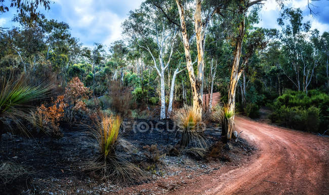 Forêt après un incendie, Parc national de la vallée de l'Avon, Morangup, Australie occidentale, Australie — Photo de stock