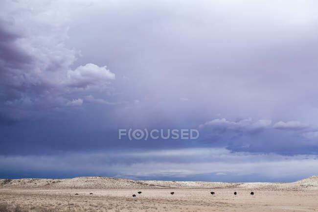 Vista cénico do Parque do transfronteiras de Kgalagadi, Kalahari, África do Sul — Fotografia de Stock