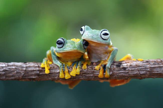 Primo piano di adorabile rana tropicale in habitat naturale — Foto stock