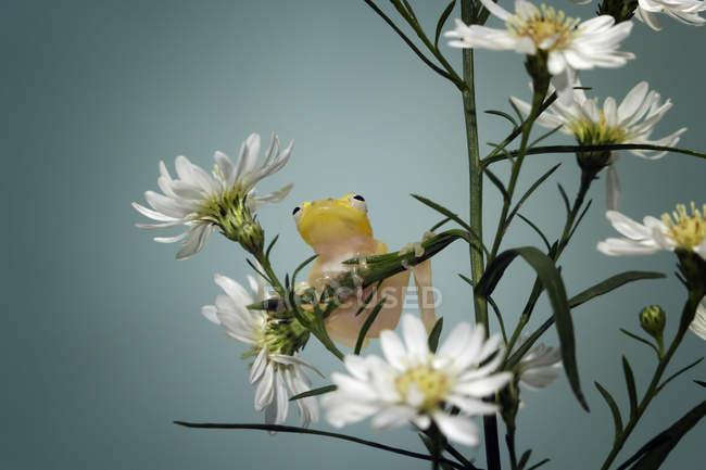 Lindo árbol rana sentado en el tallo de las flores, fondo borroso - foto de stock