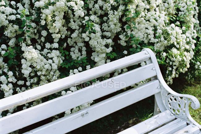 Closeup view of Bench next to spring flowers, Romania — Stock Photo