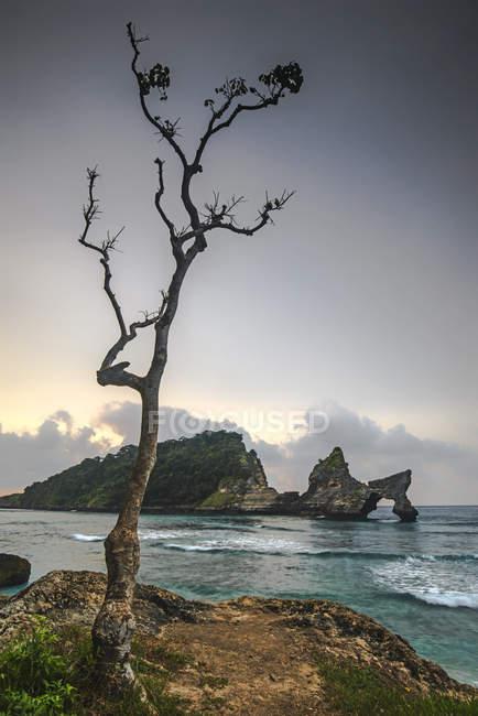Vista panoramica dell'albero sulla spiaggia di Atuh, Bali, Indonesia — Foto stock