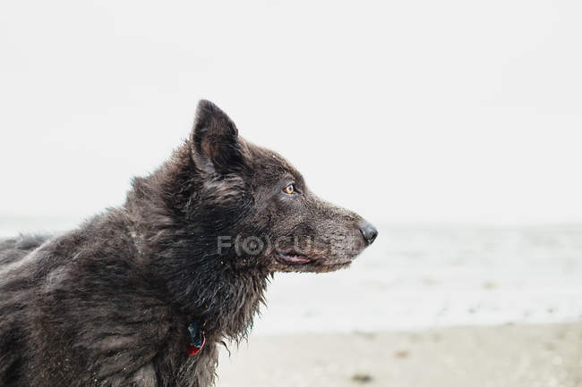 Portrait of a dog on the beach, side view — Stock Photo