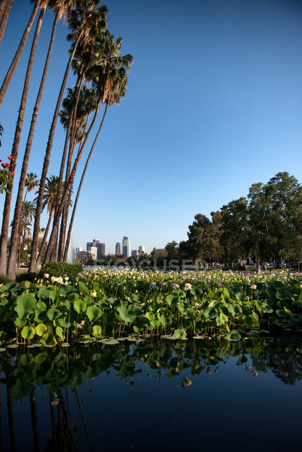 Lo skyline di Los Angeles con il nuovo centro di Wilshire Grand, Echo Park, a Los Angeles, California — Foto stock