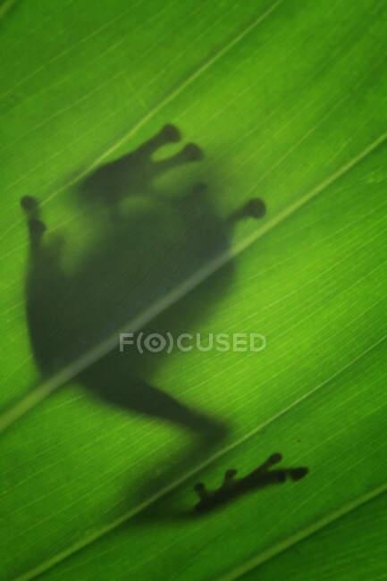 Крупным планом очаровательная маленькая тропическая лягушка в естественной среде обитания — стоковое фото