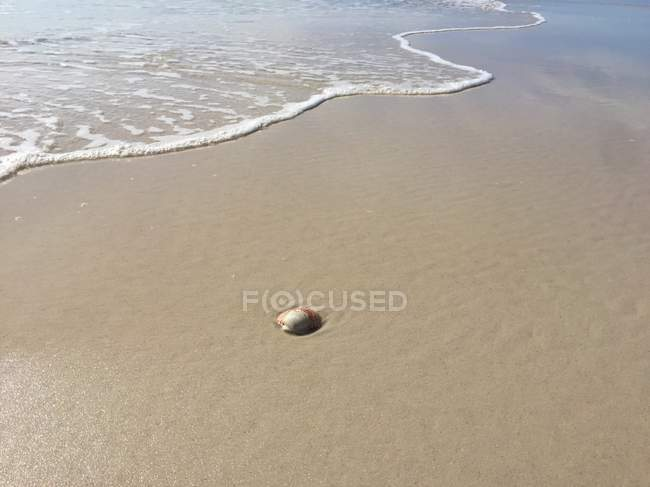 Seashell on beach, Pensacola, Santa Rosa, Florida, America, USA — Stock Photo
