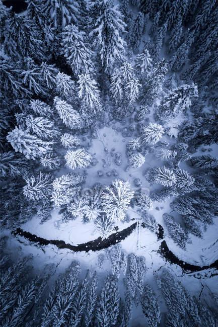 Вид с воздуха на реку, проходящую через зимний лес, Заухензе, Зальцбург, Австрия — стоковое фото