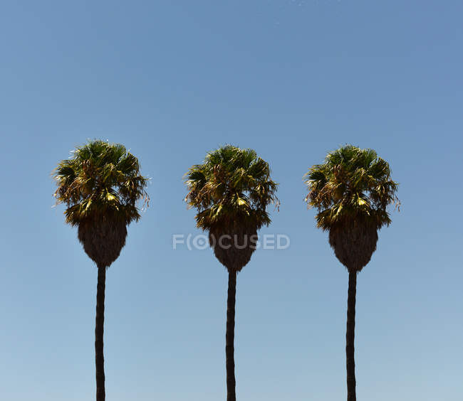 Scenic view of Three Tree palm trees in a row, Port Elizabeth, Nelson Mandela Bay, Eastern Cape, South Africa — Stockfoto