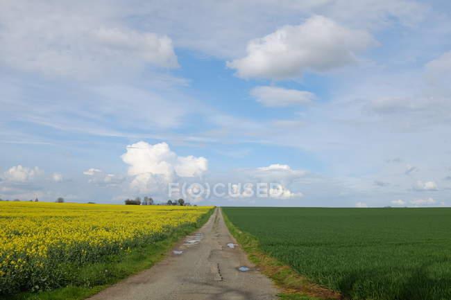 Мальовничий вид на дорогу через сільський ландшафт, Niort, Франція — стокове фото