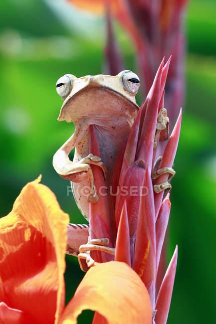 Вухаті жаби, що сидять на квітковому бутона, розмитий фон — стокове фото