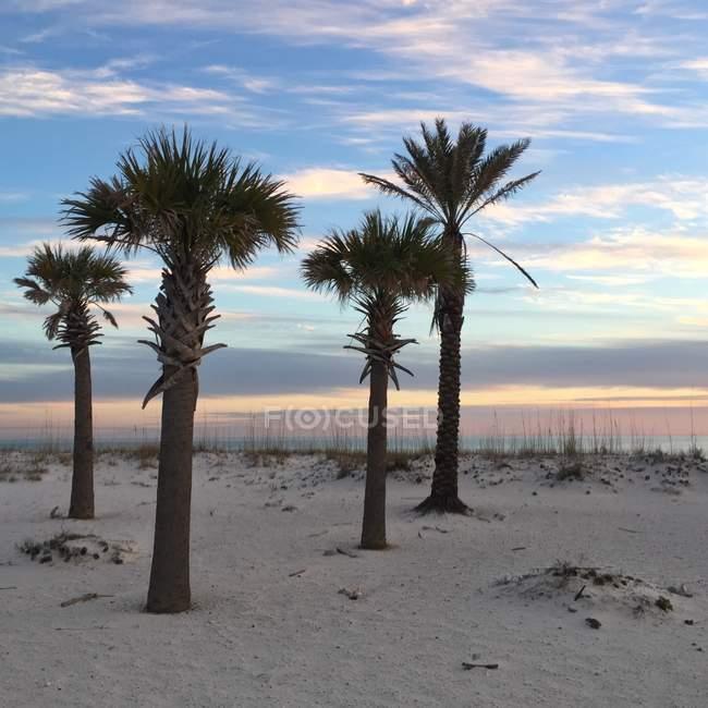 Vista panoramica di palme sulla spiaggia al tramonto, Pensacola Beach, Santa Rosa, Florida, America, USA — Foto stock