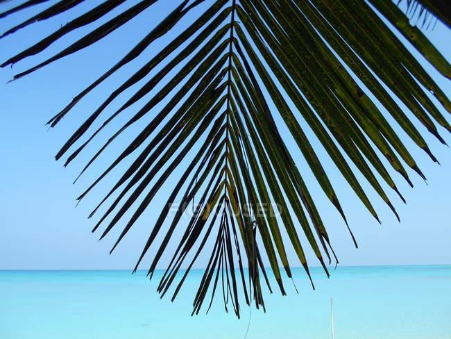Palm tree leaf on a tropical beach, Vashafaru, Haa Alif Atoll, Maldives — Stock Photo