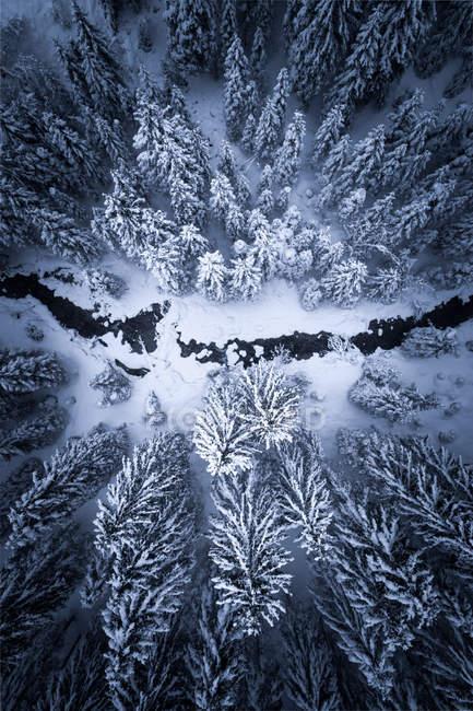 Aerial view of a river running through a winter forest, Zauchensee, Salzburg, Austria — Stock Photo