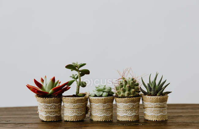 Closeup view of Five plants in a row — Stock Photo