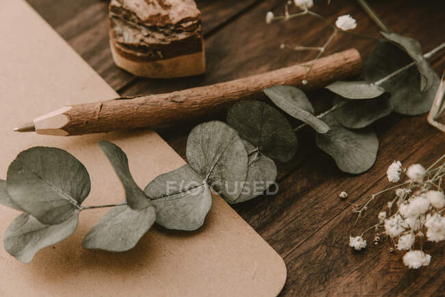 Vista de cerca de eucalipto, lápiz y portapeles - foto de stock