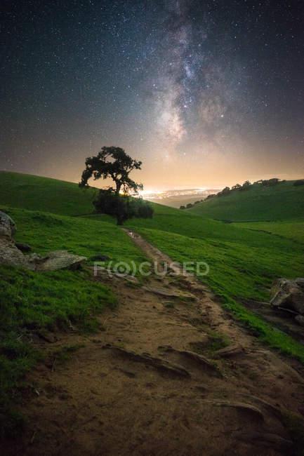 Oak tree in rolling landscape, Brushy Peak, Livermore Area Recreation and Park District, California, America, USA — Stock Photo