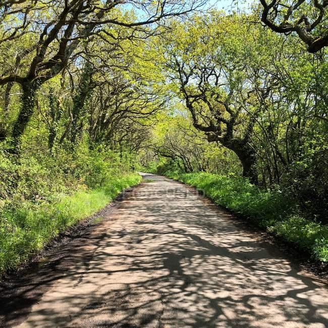 Vue panoramique sur la route boisée, île de Wight, Angleterre, Royaume-Uni — Photo de stock