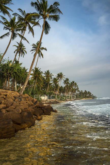 Vista panoramica sulla spiaggia fiancheggiata da palme, Polhena, Provincia meridionale, Sri Lanka — Foto stock