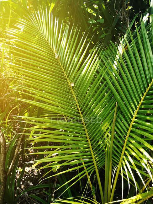 Vue en avant des feuilles de palmier à la lumière du soleil — Photo de stock