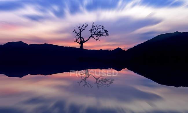 Живописный вид Отражение дерева в озере на закате, Индонезия — стоковое фото