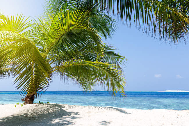Scenic view of Palm tree on a tropical beach, Maldives — Foto stock