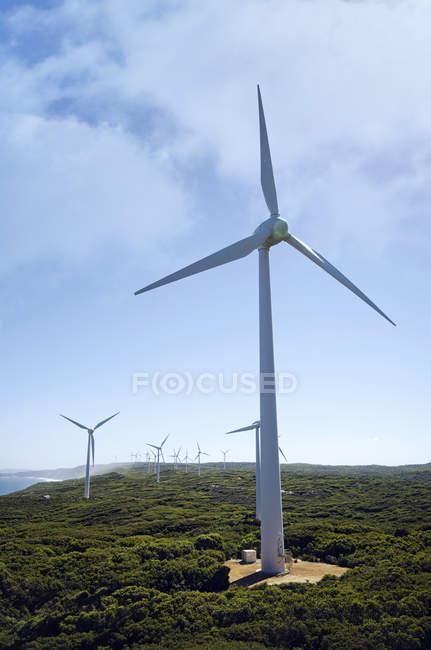 Vista cénico de turbinas de vento em uma exploração agrícola de vento, Albany, Austrália Ocidental, Austrália — Fotografia de Stock