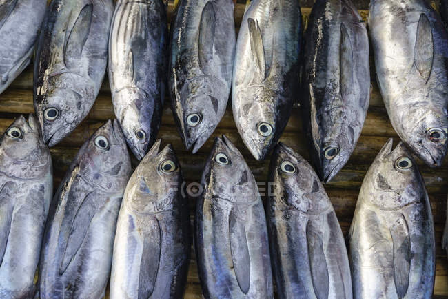 Catch of fish on a wooden table, Indonesia — Stock Photo