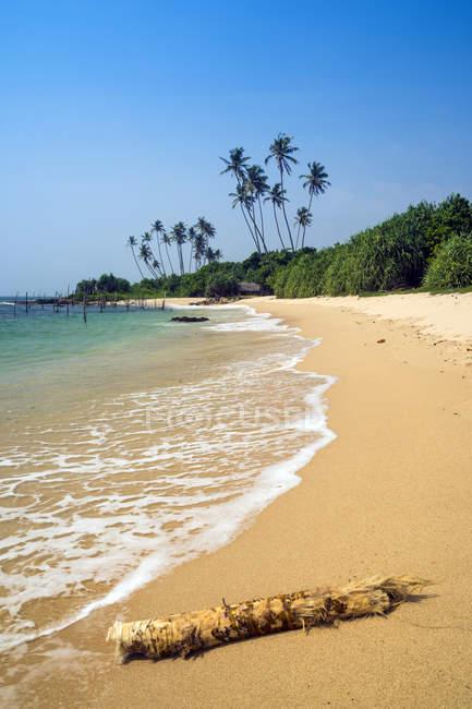 Vista panoramica del Driftwood sulla spiaggia, spiaggia di Koggala, Galle, Sri Lanka — Foto stock