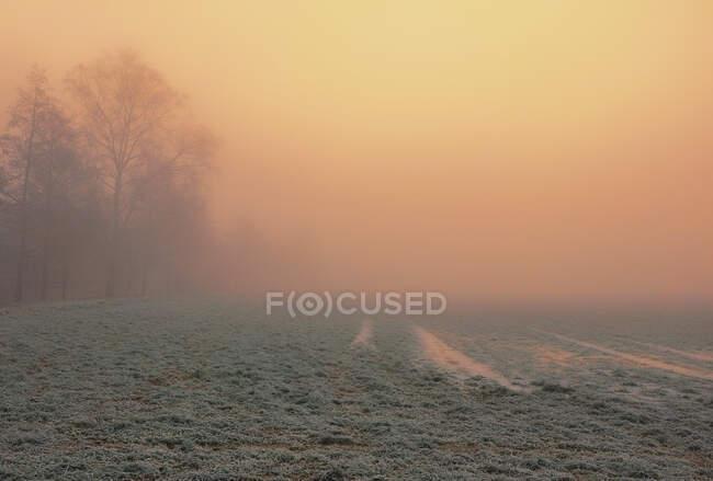 Bellissimo paesaggio autunnale con alberi e nebbia — Foto stock