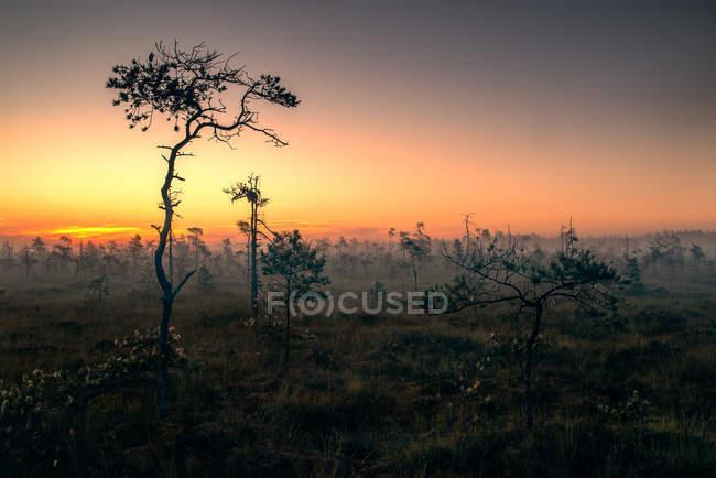 Vista cénico da paisagem rural no nascer do sol, Lithuania — Fotografia de Stock