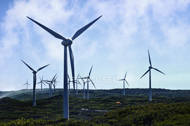 Wind turbines on a wind farm, Albany, Western Australia, Australia — Stock Photo