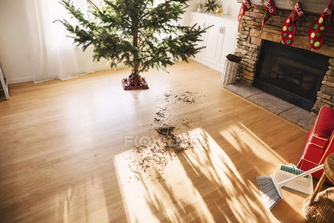 Pine needles on living room floor after setting up a Christmas tree — Stock Photo