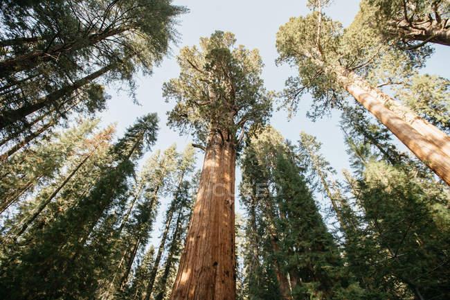 Vue panoramique de Sequoia National Park, Californie, Amérique, Usa — Photo de stock