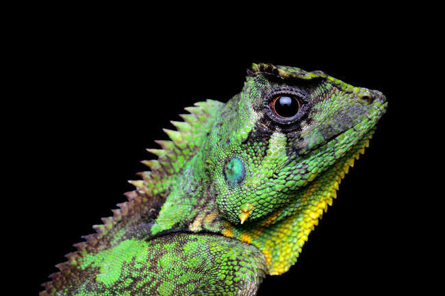 Close-up of a lizard, Indonesia — Stock Photo