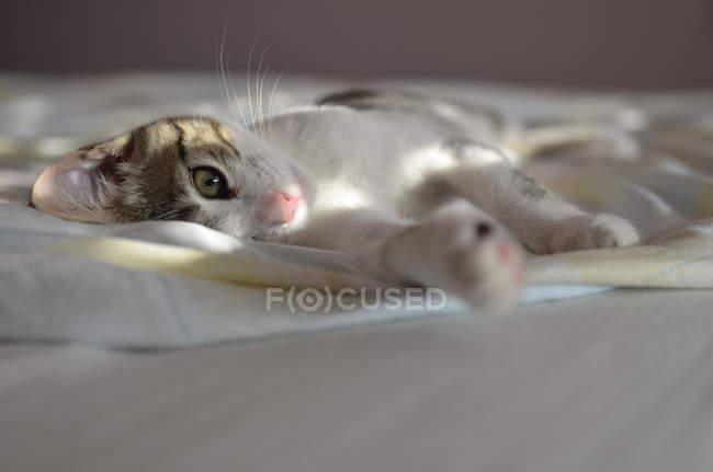 Кошка, лежащая на кровати в солнечном свете, крупным планом зрения — стоковое фото