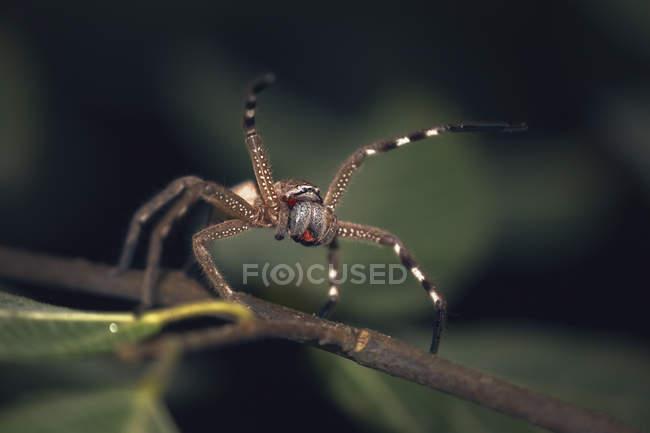 Vue de plan rapproché de l'araignée de chasseur sur une branche, foyer sélectif — Photo de stock