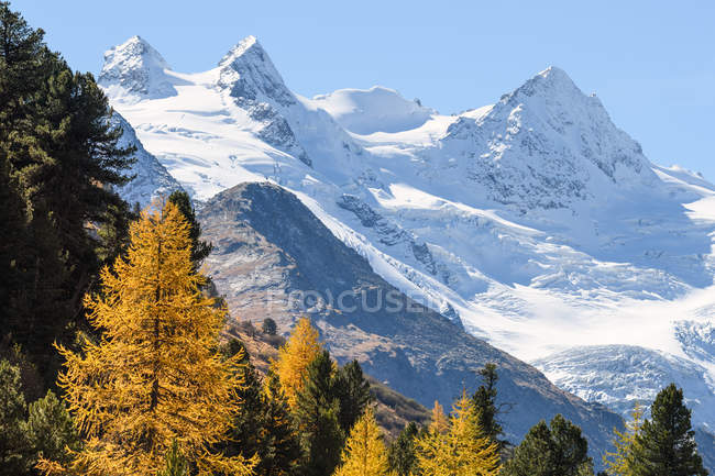 Snowcapped mountains and fall trees, Engadine Valley, Switzerland — Stock Photo