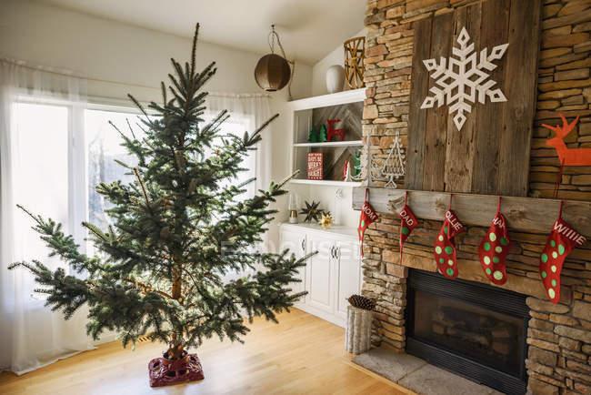 Рождественская елка в гостиной готова к украшению — стоковое фото