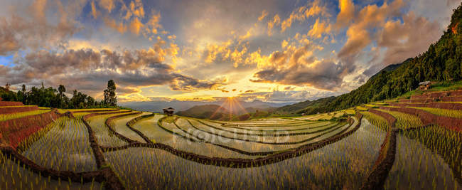 Scenic view of Terraced Rice Field,  Chiang Mai, Thailand — Stock Photo